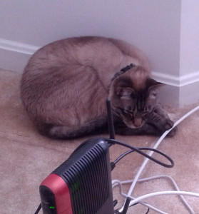 Lynx is upset with the time we spend on the Internet and is hereby throttling our bandwidth.