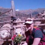 Alpacas Eating My Flowers